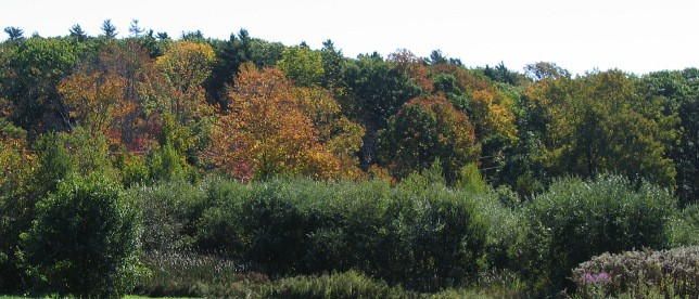 Maine Autumn Leaves on the Trees