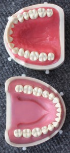 The Plastic Teeth Dental Students Work On