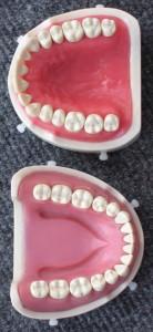 The Plastic Teeth Dental Students Work On