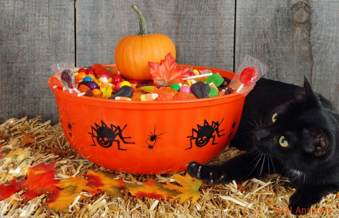 Should Dentists Buy Back Halloween Candy?