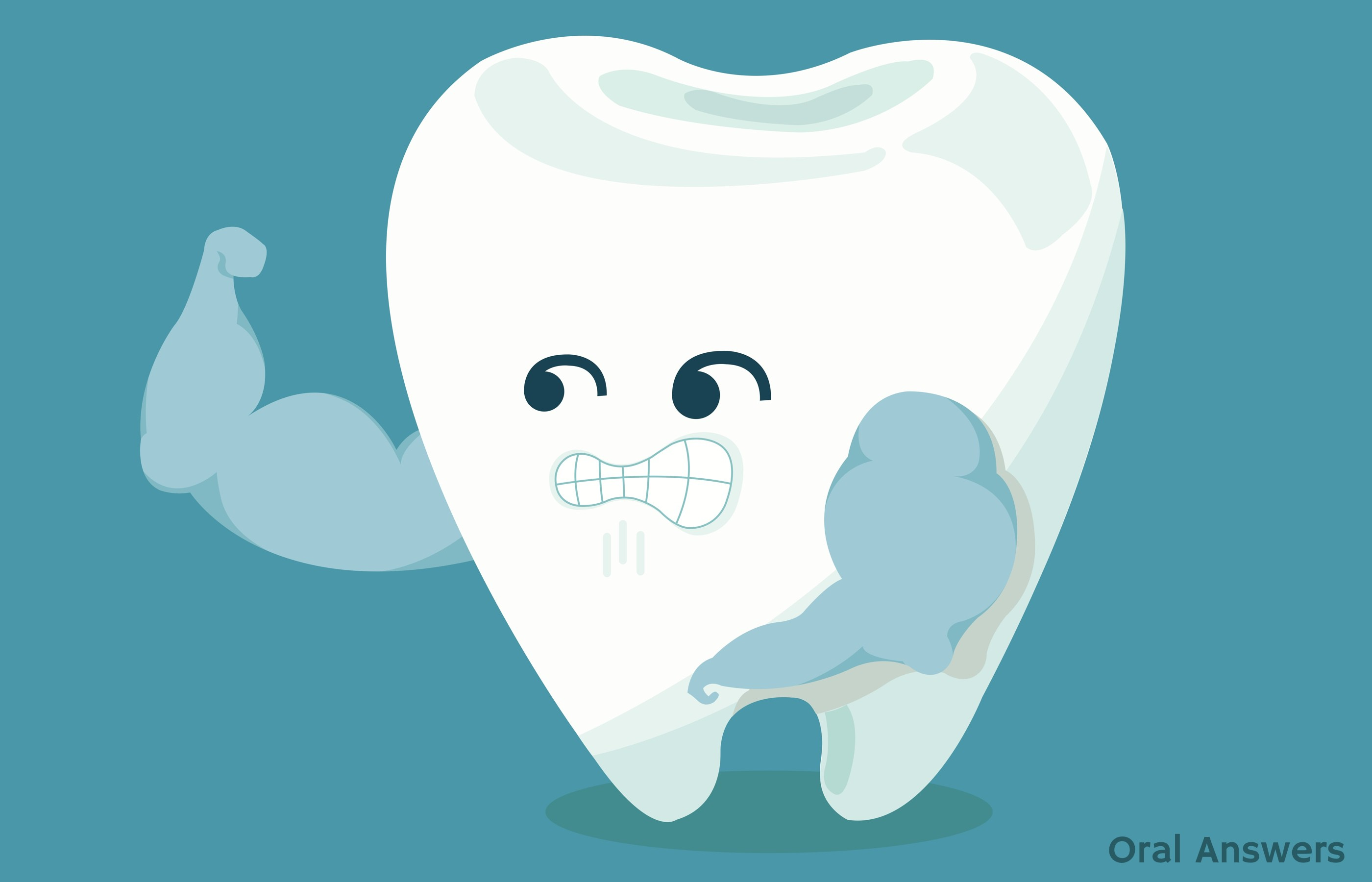 The Anatomy Of A Tooth Oral Answers